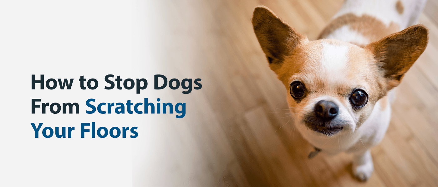 How to Stop Dogs From Scratching Your Floors