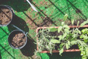 plants for biophilic design